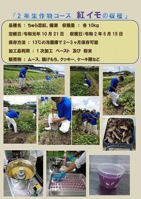 紅イモ収穫_page-0001.jpg